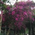 写真: 都市の花