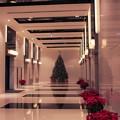 写真: --クリスマスツリー--