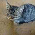 Photos: 捨て猫 再び!