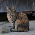 写真: 野良猫キジトラ