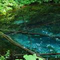 Photos: 神の子池1