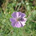 写真: 蜂と花