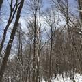 写真: 冬の道
