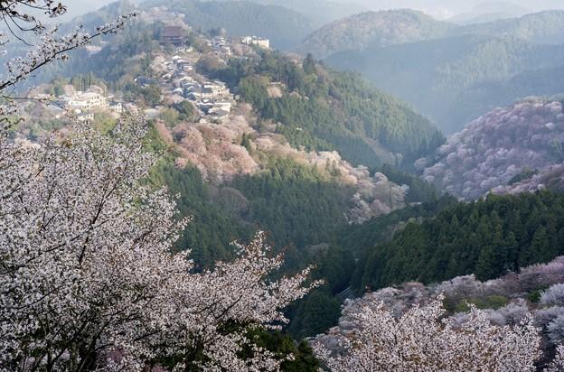 吉野蔵王堂遠望-06413S