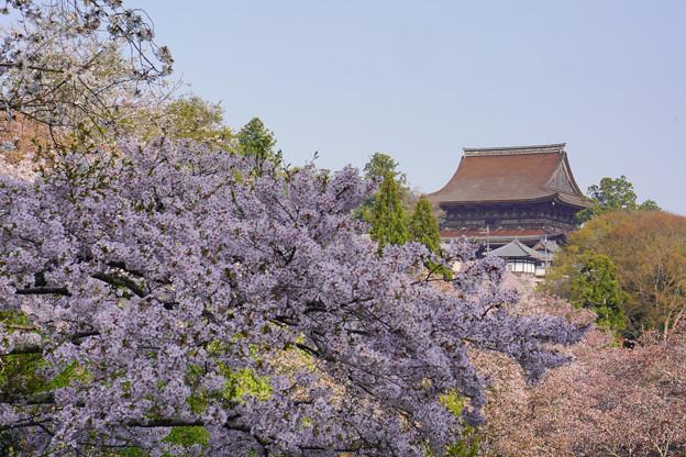 吉水から蔵王堂DSC06463_ed