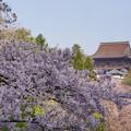 Photos: 吉水から蔵王堂DSC06463_ed