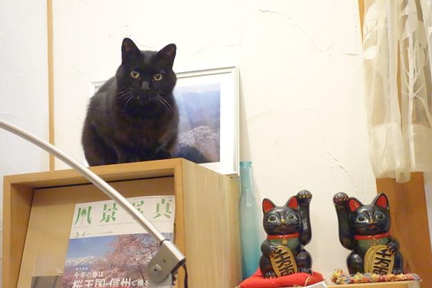 招き猫fun_DSC01186