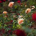 浜寺公園DSC09707_ed