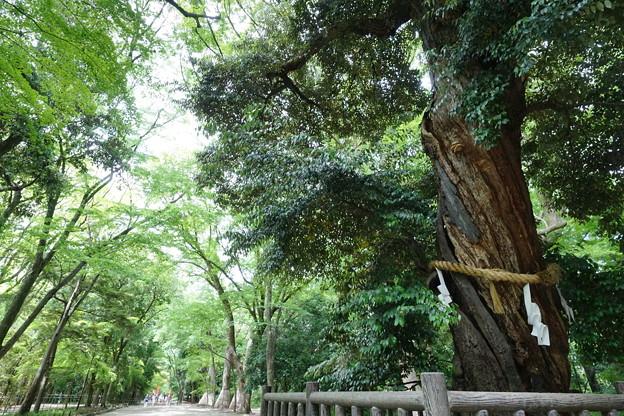 糺の森DSC02012