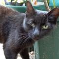 外猫96_DSC02908_ed