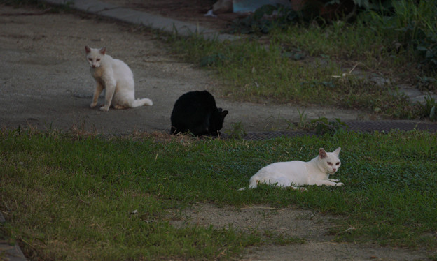 catsDSC02193_ed