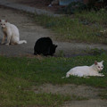 写真: catsDSC02193_ed