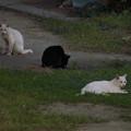 Photos: catsDSC02193_ed
