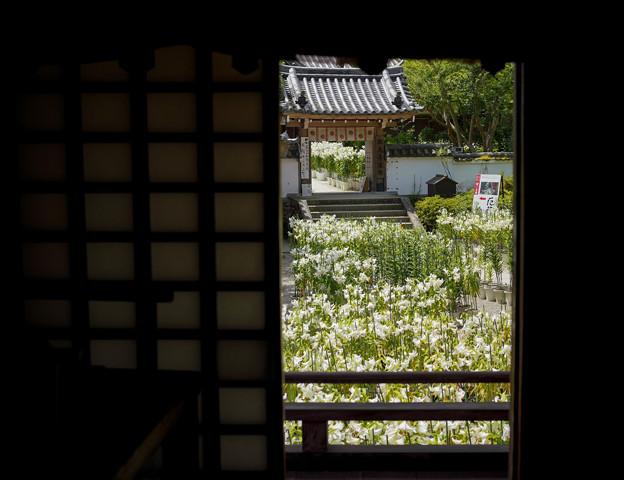 写真: 本堂からDSC03283_ed