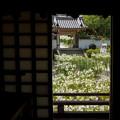 Photos: 本堂からDSC03283_ed