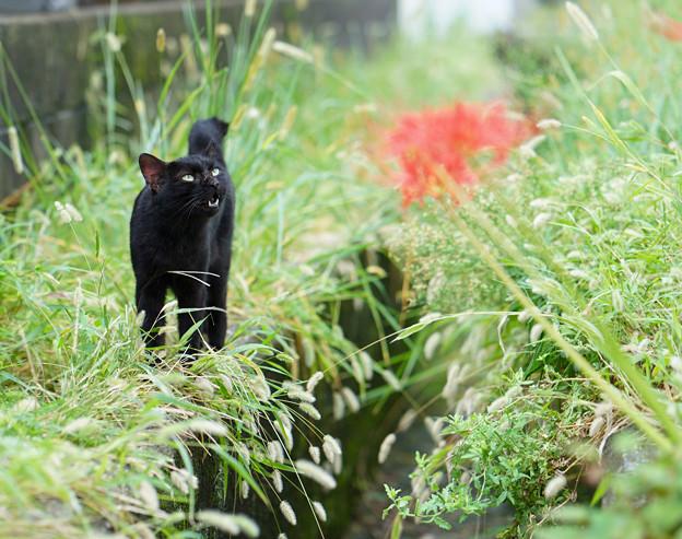 外猫96_DSC03688_ed