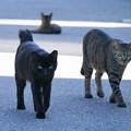 外猫96_DSC03297_ed