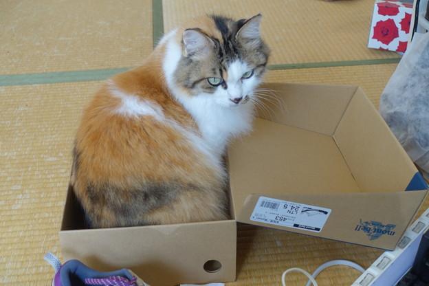 箱猫DSC00966