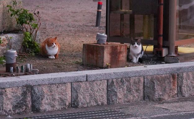 CatsDSC03906_ed