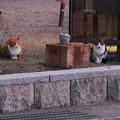 Photos: CatsDSC03906_ed