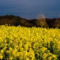 Photos: 菜の花の沖-04890