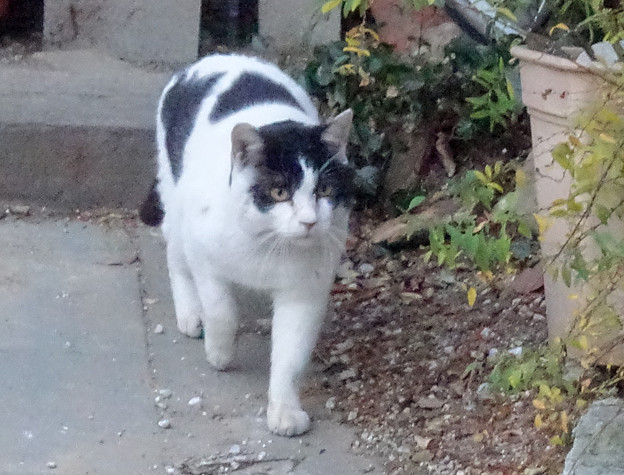 外猫WBDSC01803_ed