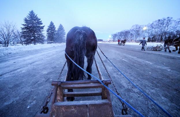 馬の尻P1012753_ed