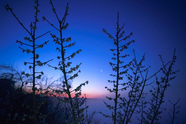 黎明月ヶ瀬-03986