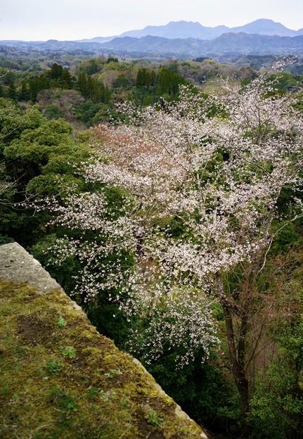 岡城から久住桜-06551s