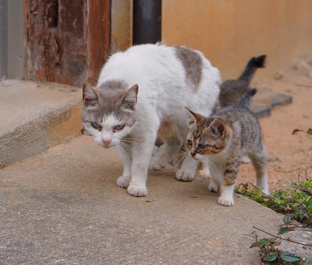 CatsDSC08925_ed