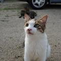 Photos: 豊島猫DSC01624_ed