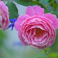 Photos: misato_DSC02502_ed
