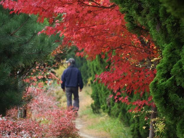お散歩紅葉