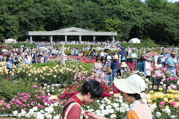 花がたくさん、人もたくさん