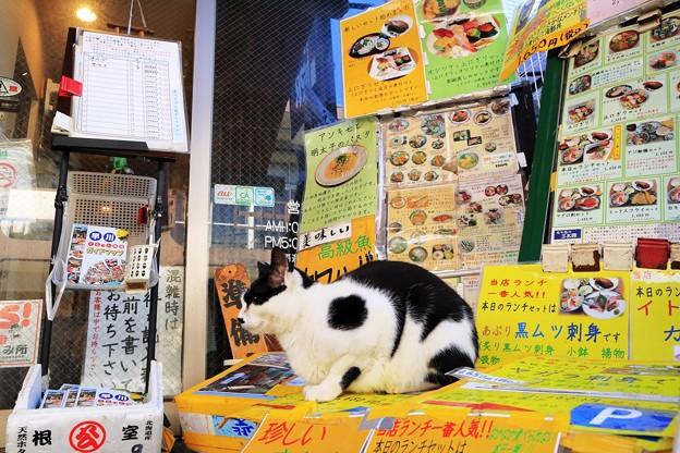 小田原海鮮食堂