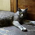 Photos: ponchat180812_DSC4273ぐり