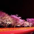 Photos: 那賀川桜~夜景~