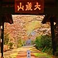 写真: 春の夢、朧げに咲く ~本立寺山門~