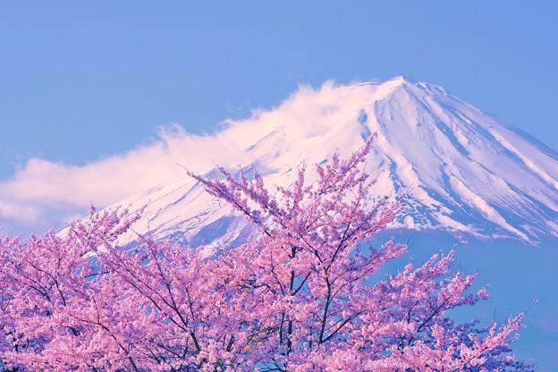 富士には桜が良く似合う・・・