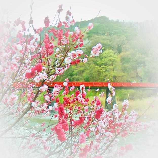 花桃の郷・・・阿智