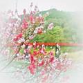 写真: 花桃の郷・・・阿智