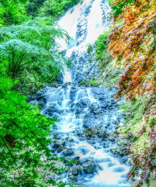 写真: Green Forest ~旭滝~