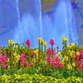 写真: Green Forest ~Sprinkler~