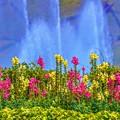 Photos: Green Forest ~Sprinkler~