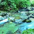 写真: Green Forest ~雨上がりの渓流に~