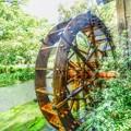 写真: 日本の夏・・・水車小屋