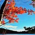写真: 静かな湖畔の赤・・・白駒池
