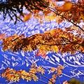 写真: 静かな湖畔の秋景色・・・半分青い(*´з`)