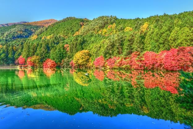 写真: 鏡面の秋景色・・・南伊奈ケ湖