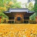 写真: 銀杏紅葉の舞散る二岡神社で・・・たった今、風が止まった